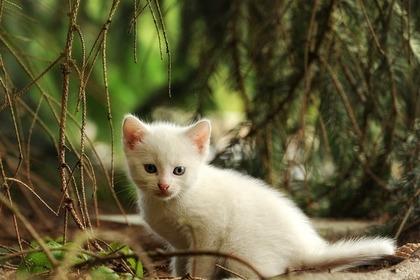 Middle cat 57e7d5404e 1280