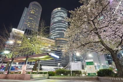 名古屋駅と桜の木