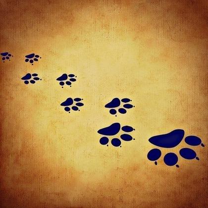 ネコの足跡