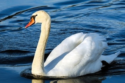 真っ白な鳥