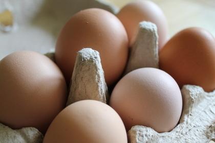 容器に入った卵