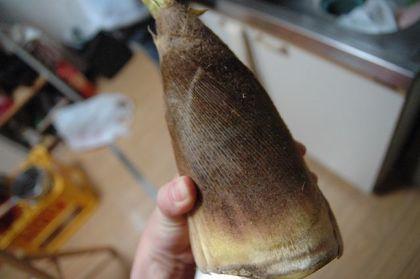 筍のカツオ節煮に使う筍