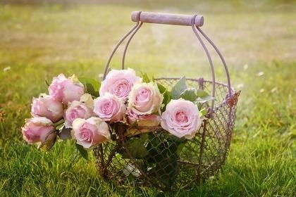 バラが入ったワイヤーバスケット