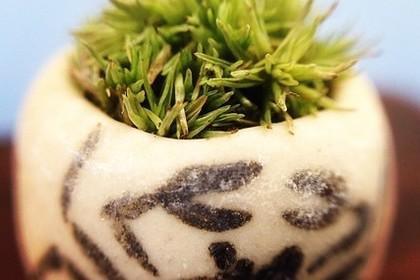 苔のミニ盆栽