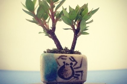 シンプルなミニ盆栽