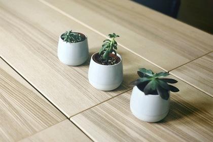 ポットのミニ盆栽