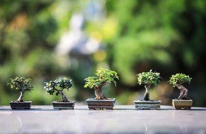 小さな盆栽