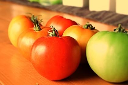 色とりどりのトマト画像