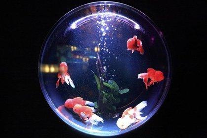 丸い金魚鉢