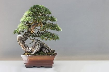 Middle bonsai 1805501 1280