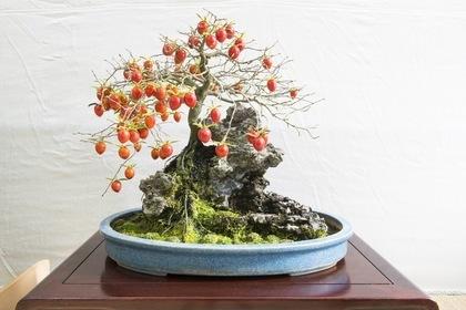 実の付いた盆栽