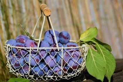 果物が入ったバスケット