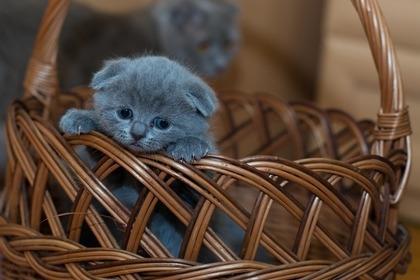 かごと子猫