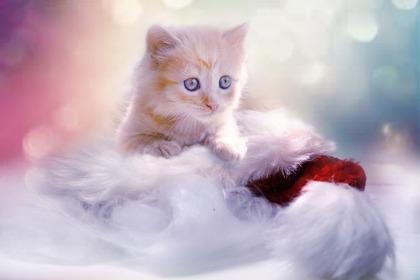きらきら猫