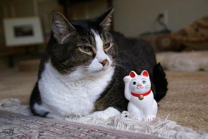 猫と招き猫