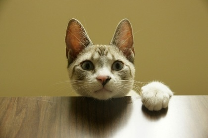 机に手を置く猫