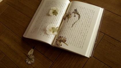 本に挟まれた押し花