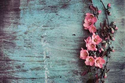 壁に飾られた花