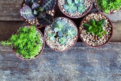 植えられた色々な種類の植物