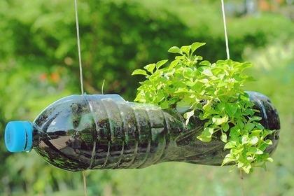 ペットボトルと植物