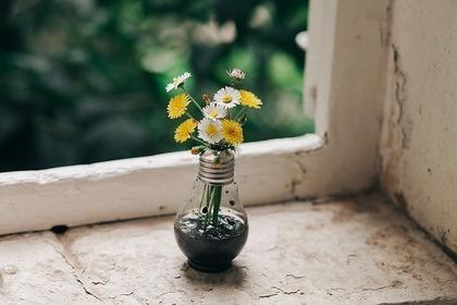 電球を花瓶にして窓辺に飾っている様子