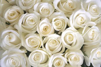白いバラのブーケ