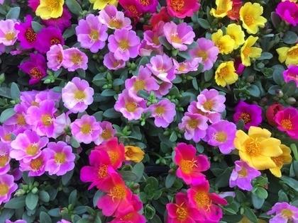 紫を基調とした花々