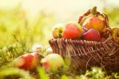 りんごの夢