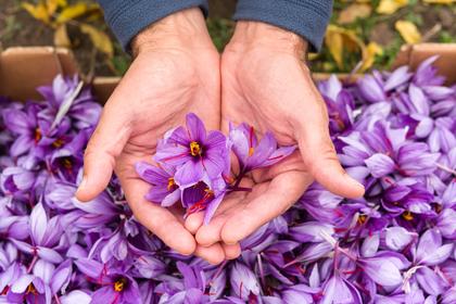 花をもつ手