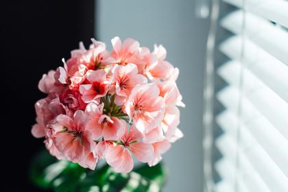 オフィスで飾られた花