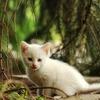 Small thumb cat 57e7d5404e 1280