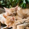 Small thumb kittens 57e9d4454f 1280