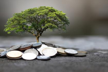 コインで大樹が育つ
