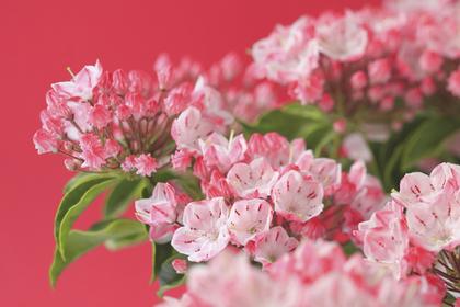 小さくて可愛い花々