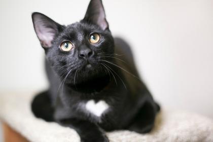 上を見る黒猫