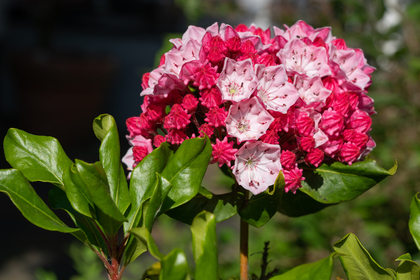 小ぶりでボリューミーな花